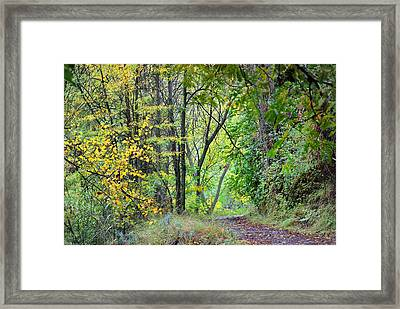The Dense Forest Framed Print by Guido Montanes Castillo