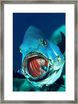 The Dentist Framed Print by Sok wan andy Yeo