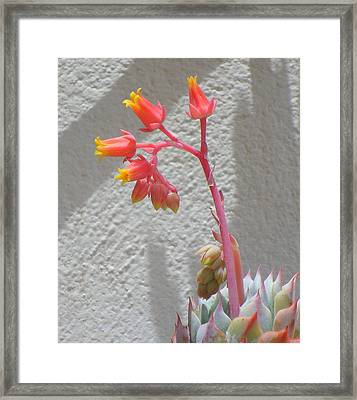 Framed Print featuring the photograph The Desert Blooms by Lew Davis