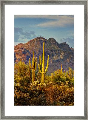 The Desert Golden Hour II  Framed Print