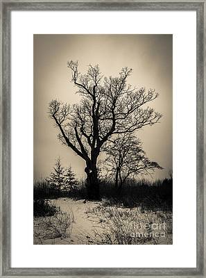 The Devil's Tree Framed Print by Jeffrey Miklush