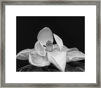 The Dinner Party Framed Print by Wendy J St Christopher