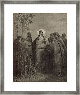 The Disciples Plucking Corn On The Sabbath Framed Print by Antique Engravings