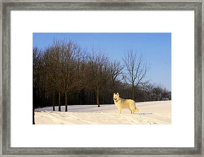 The Dog On The Hill Framed Print by Kay Novy