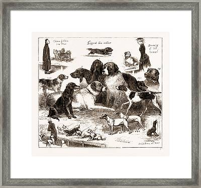 The Dog Show At The Crystal Palace, London Framed Print by Litz Collection