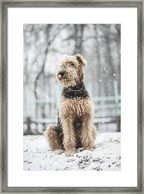 The Dog Under The Snowfall Framed Print