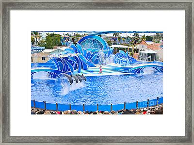 The Dolphin Show Blue Horizons At Seaworld. Framed Print by Jamie Pham