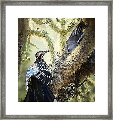 The Dove Vs. The Roadrunner Framed Print by Saija  Lehtonen