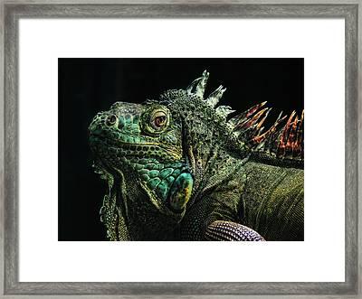 The Dragon Framed Print by Joachim G Pinkawa