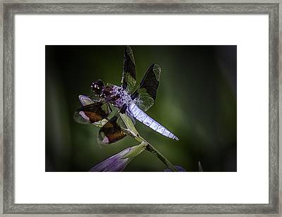 The Dragons Lair Framed Print by Barry Jones