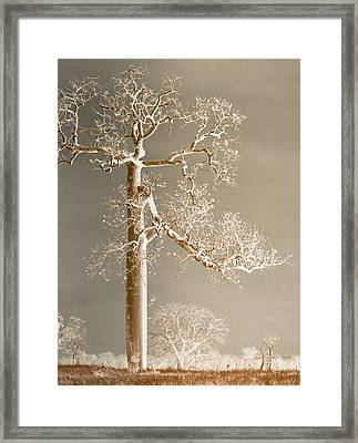 The Dreaming Tree Framed Print