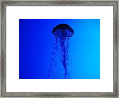 The Drifter Framed Print by Mike Greco