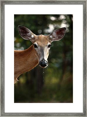 Framed Print featuring the photograph The Drip by Rita Kay Adams