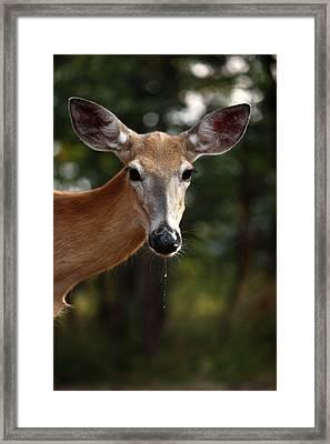 The Drip Framed Print by Rita Kay Adams