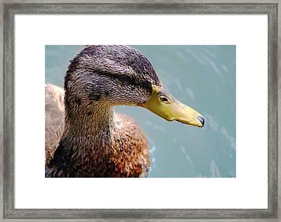 The Duck Framed Print by Milena Ilieva