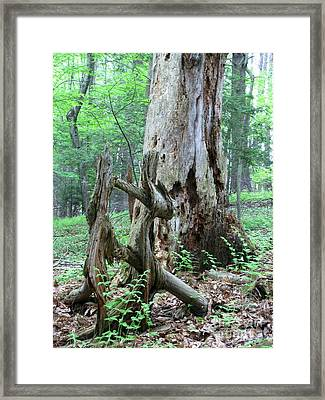 The Duel Framed Print by Melissa Stoudt