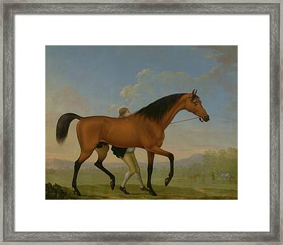 The Duke Of Ancasters Bay Stallion, Blank Framed Print by Litz Collection