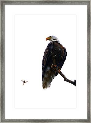 The Eagle And The Hummingbird Framed Print by Tranquil Light  Photography
