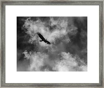 The Eagle Bw Framed Print by Ernie Echols
