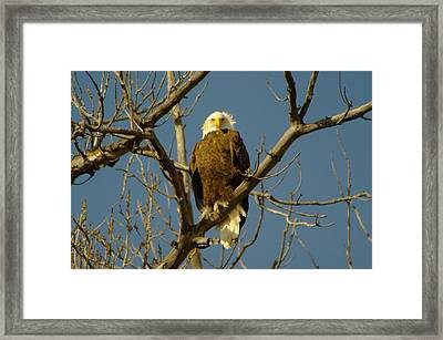 The Eagle Looks Down Framed Print by Jeff Swan