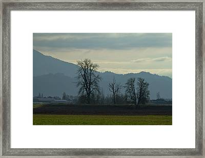Framed Print featuring the photograph The Eagle Tree by Eti Reid
