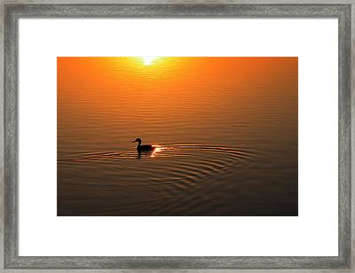 The Early Bird Framed Print