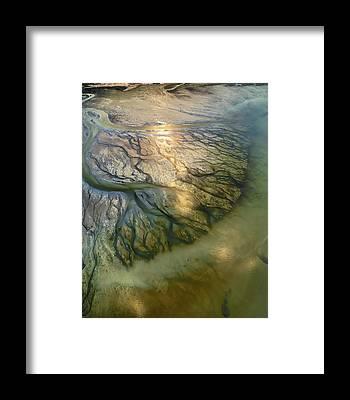 Capillary Framed Prints