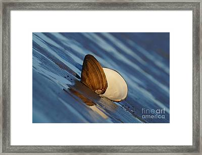 The Easy Catch Framed Print