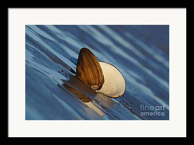 Faa Featured Framed Prints