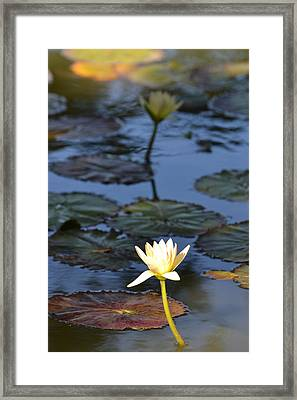 The Echo Of A Lotus Flower Framed Print