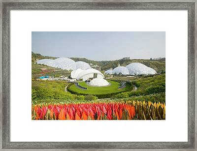 The Eden Project In Cornwall Framed Print