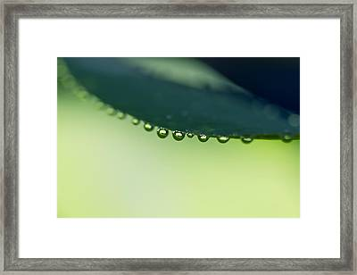 Framed Print featuring the photograph The Edge II by Priya Ghose