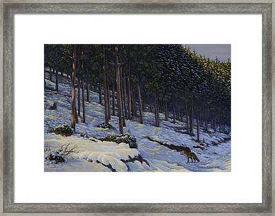 The Edge Of The Forest Framed Print