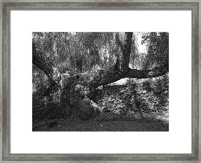 The Elephant Tree Framed Print