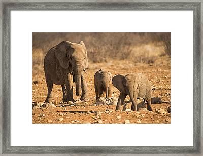 The Elephants Itching Rock Framed Print by Paul W Sharpe Aka Wizard of Wonders