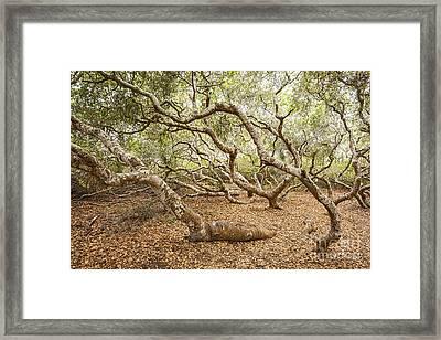 The Elfin Forest  Framed Print by Jamie Pham