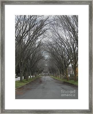 The Elm Arch Framed Print