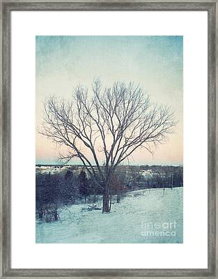 The Elm In Winter Framed Print by Kay Pickens