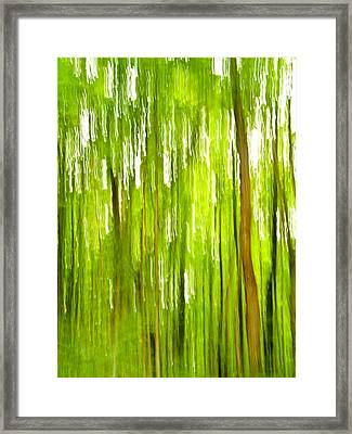The Emerald Forest Framed Print by Bill Gallagher