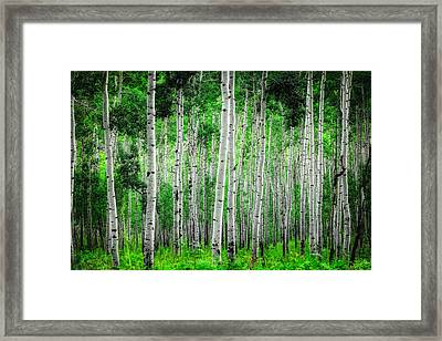 My Own Emerald Forest Framed Print