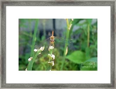 The Emo Dragonfly Framed Print