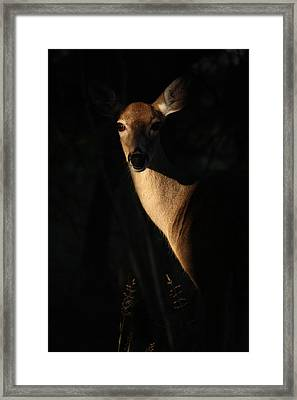 Framed Print featuring the photograph The Empress  by Rita Kay Adams