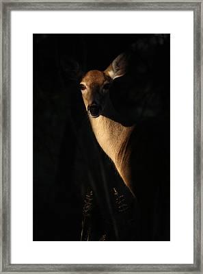 The Empress  Framed Print by Rita Kay Adams