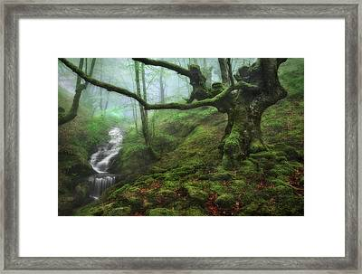 The Enchanted Forest Framed Print