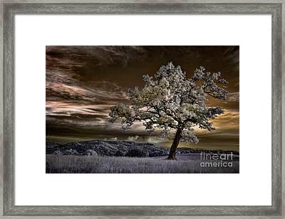 The Enchanted Tree - Blue Ridge Parkway Framed Print by Dan Carmichael