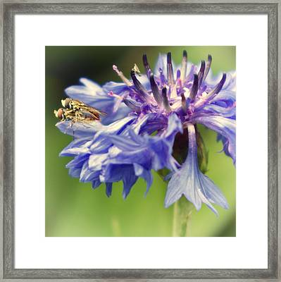 The Encounter Framed Print by Darlene Kwiatkowski