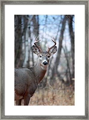 Framed Print featuring the photograph The Encounter by Rita Kay Adams