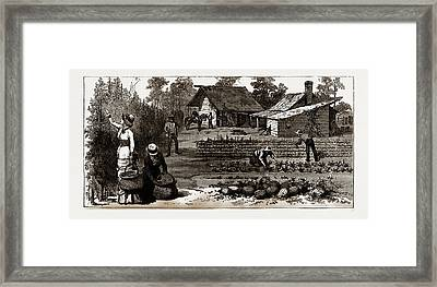 The English Garden, Scenes In Rugby, The English Colony Framed Print