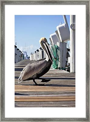 The Entertainer Framed Print by Andres LaBrada