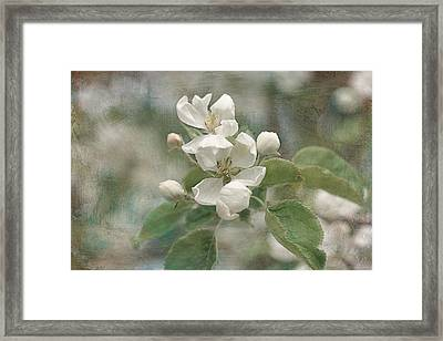 The Essence Of Spring  Framed Print by Maria Angelica Maira